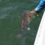 Bull Red Drum Fishing Charleston 101 LLC 20191003_122748